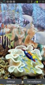 The real aquarium - Live Wallpaper-5